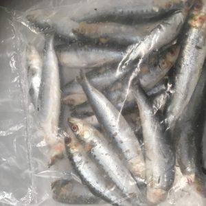 Sardines add on